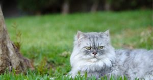 Happy grey cat