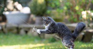 fun cat playing outside